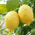 Les zestes de citron, des ingrédients multifonction