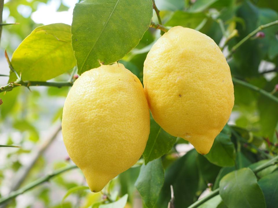 Les zestes de citron