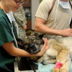 Votre petit chien se sent mal ? Voici la solution idéale pour vous